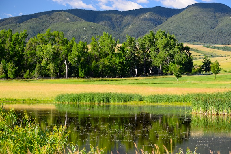 Spring Goose Pond