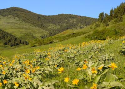 Balsamroot Mountains