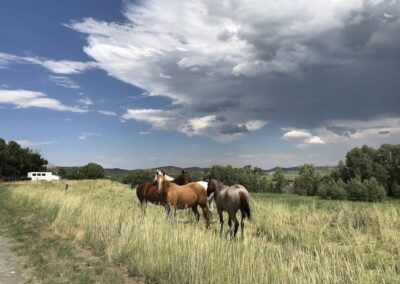 Greybull River Ranchette Horse Pasture