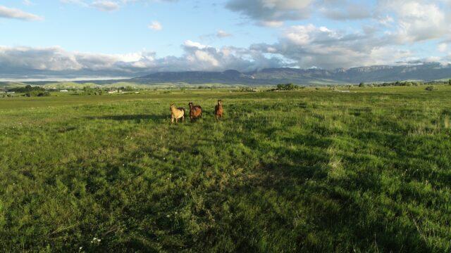 Roadifer Ranch