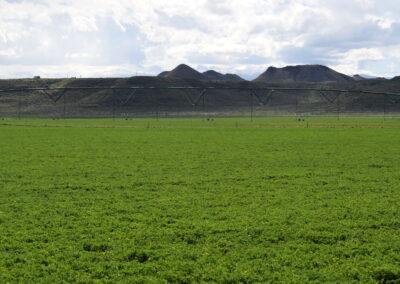 C-Bar-B-early-May-alfalfa