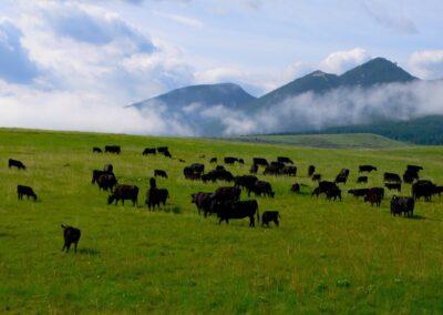 COWS MOUNTAIN