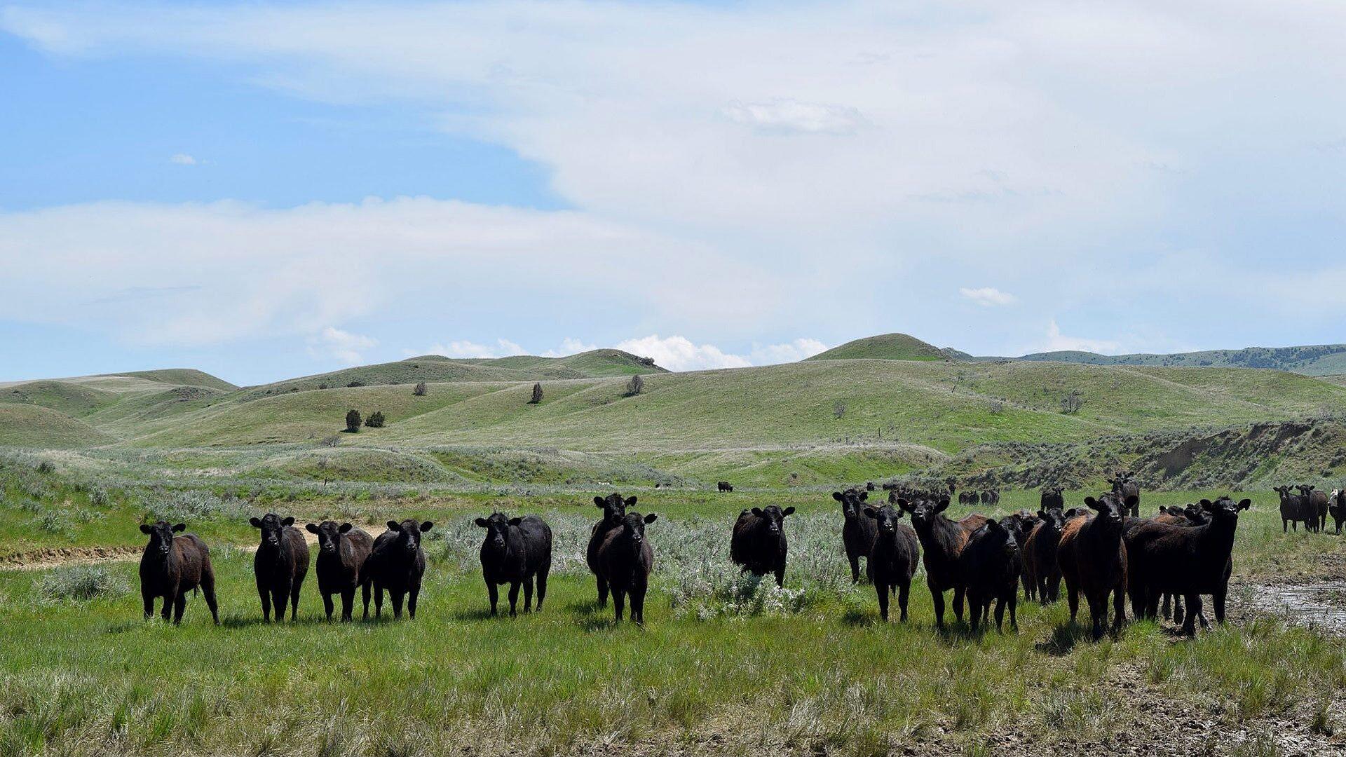 Rancholme Ranch