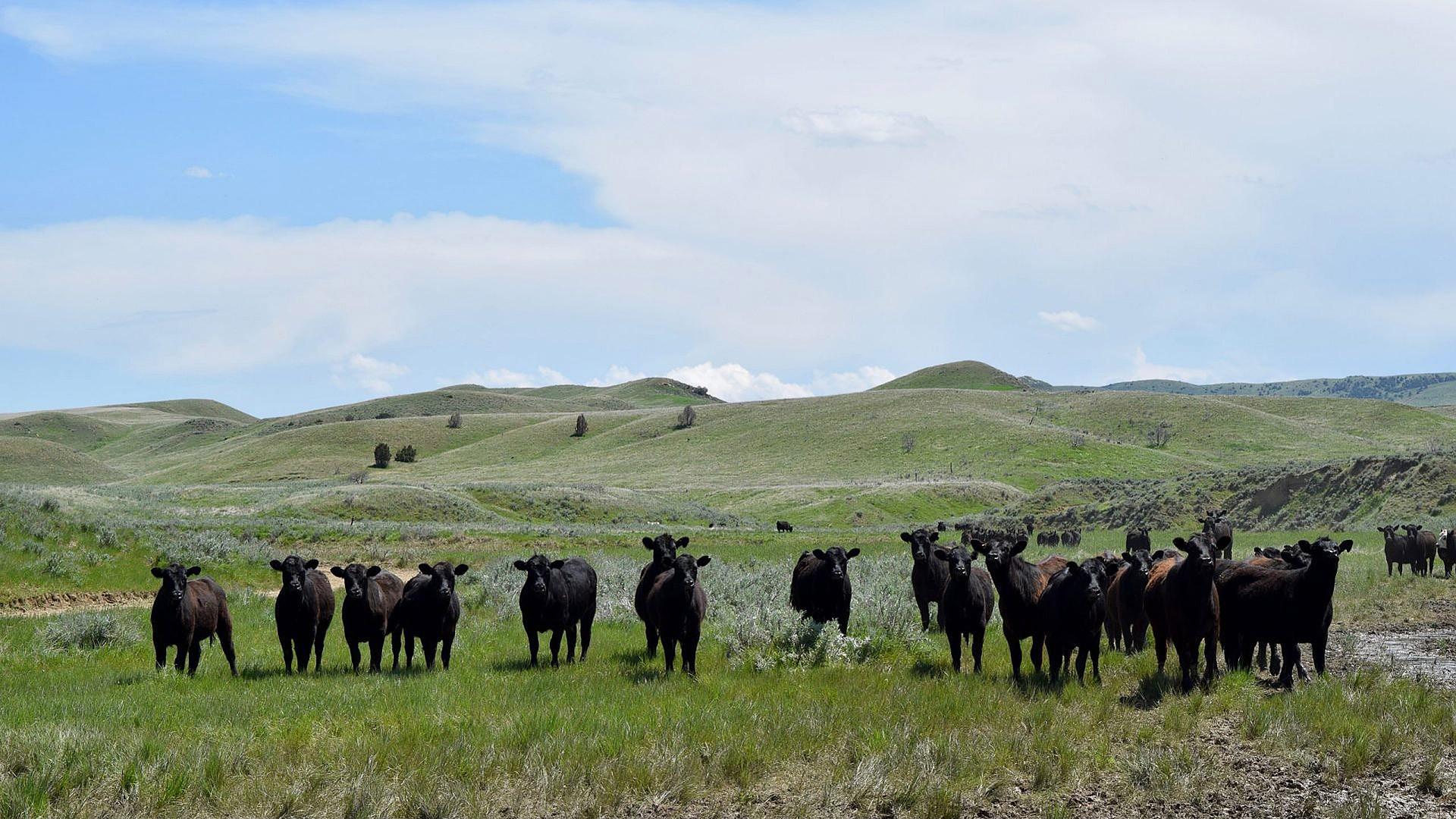 Rancholme Ranch – Under Contract
