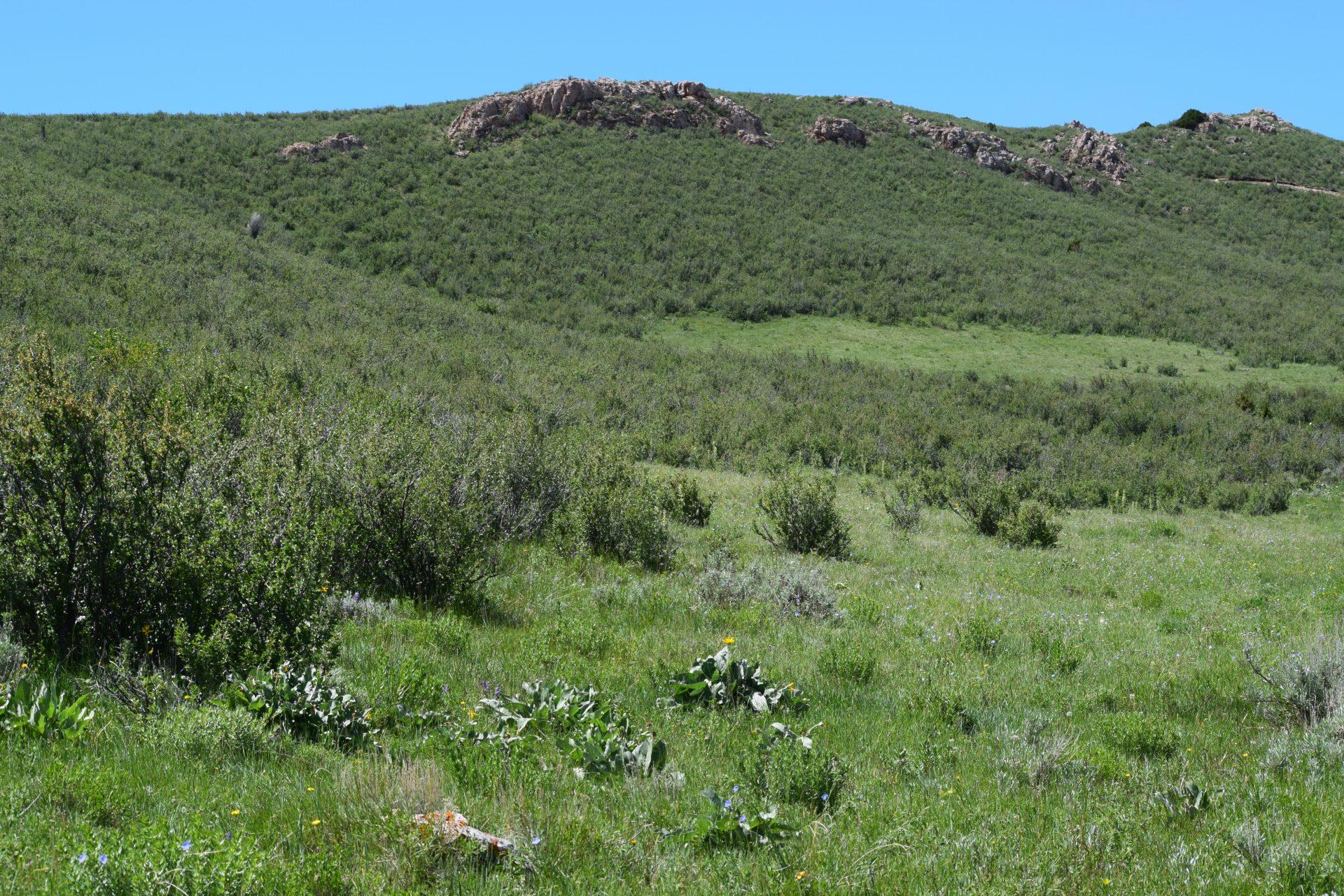 Mule deer habitat