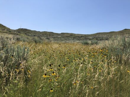 Eastern Montana Ranch for Sale