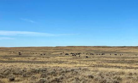 Antelope Creek Ranch